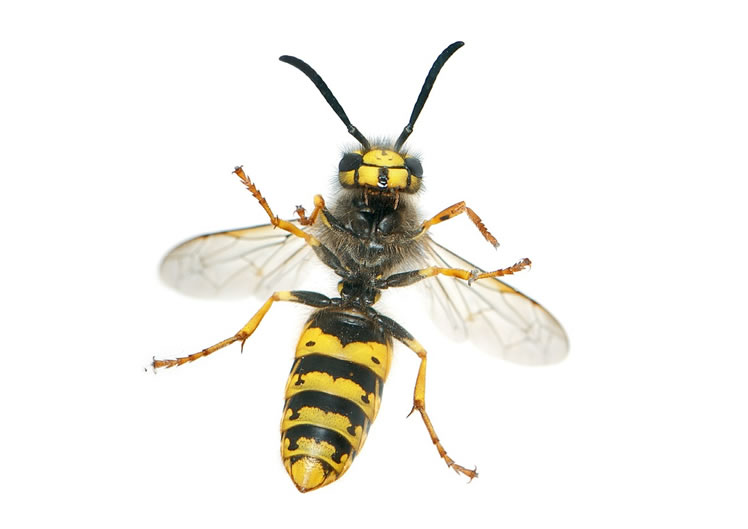 Wasp Control Bowden 24/7, same day service, fixed price no extra!