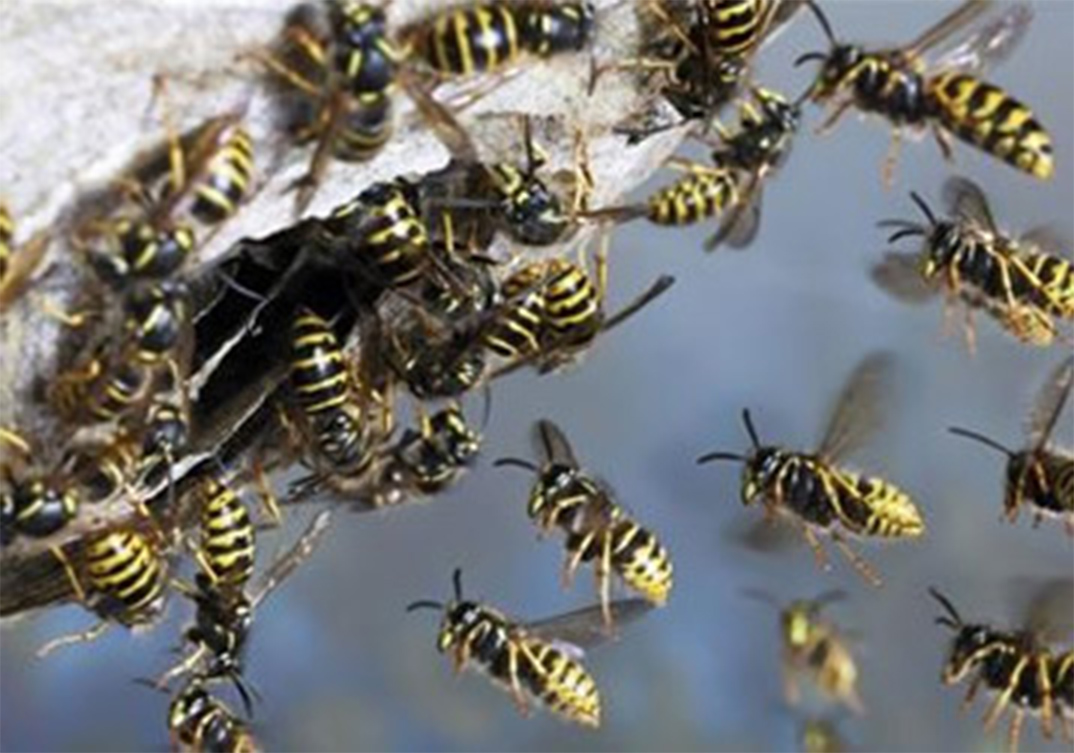 Wasp Control Trafford Park 24/7, same day service, fixed price no extra!